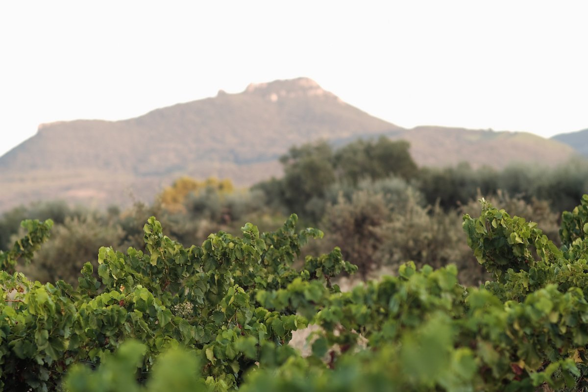 grand vin sud